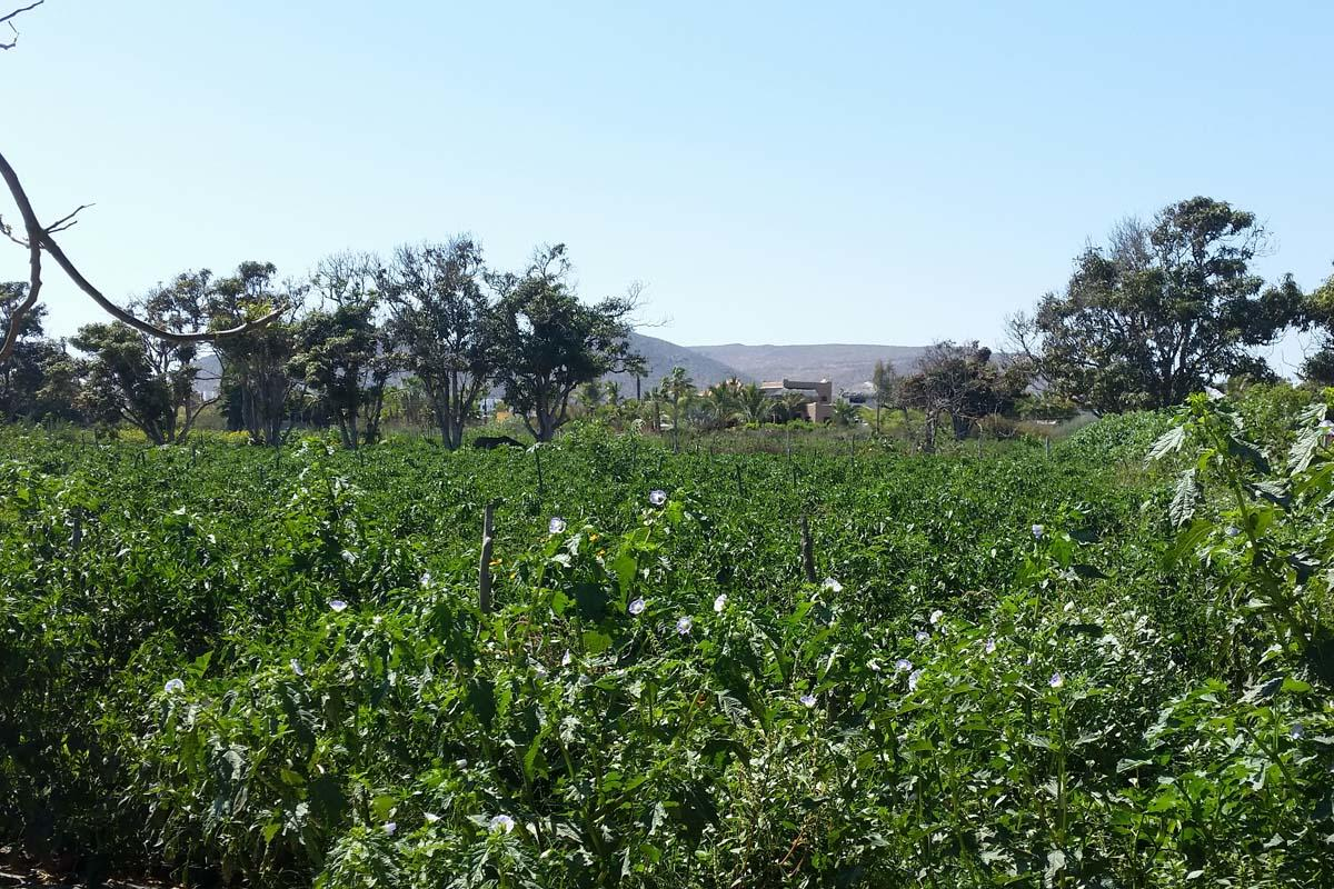 Rancho LaMore-13