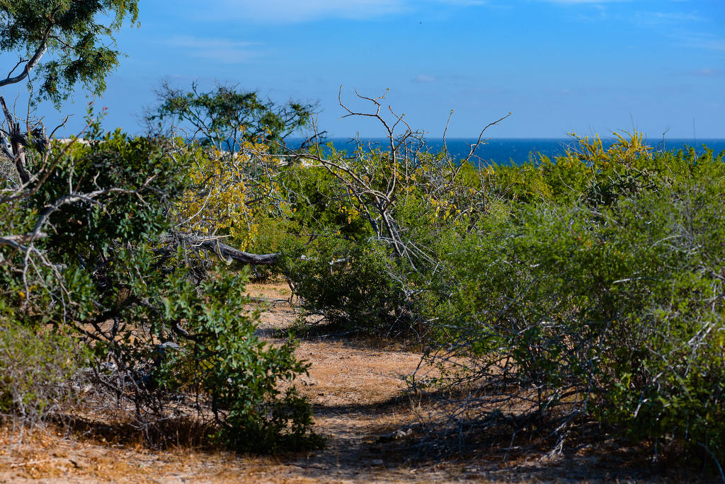 East Cape, ,Land,For Sale,Camino a Cabo del Este,19-218