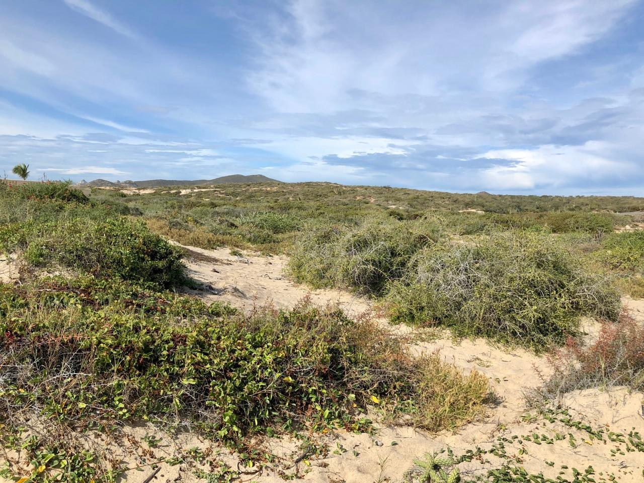 East Cape, ,Land,For Sale,Playa Tortuga, Mza 1, Lot #14,19-322