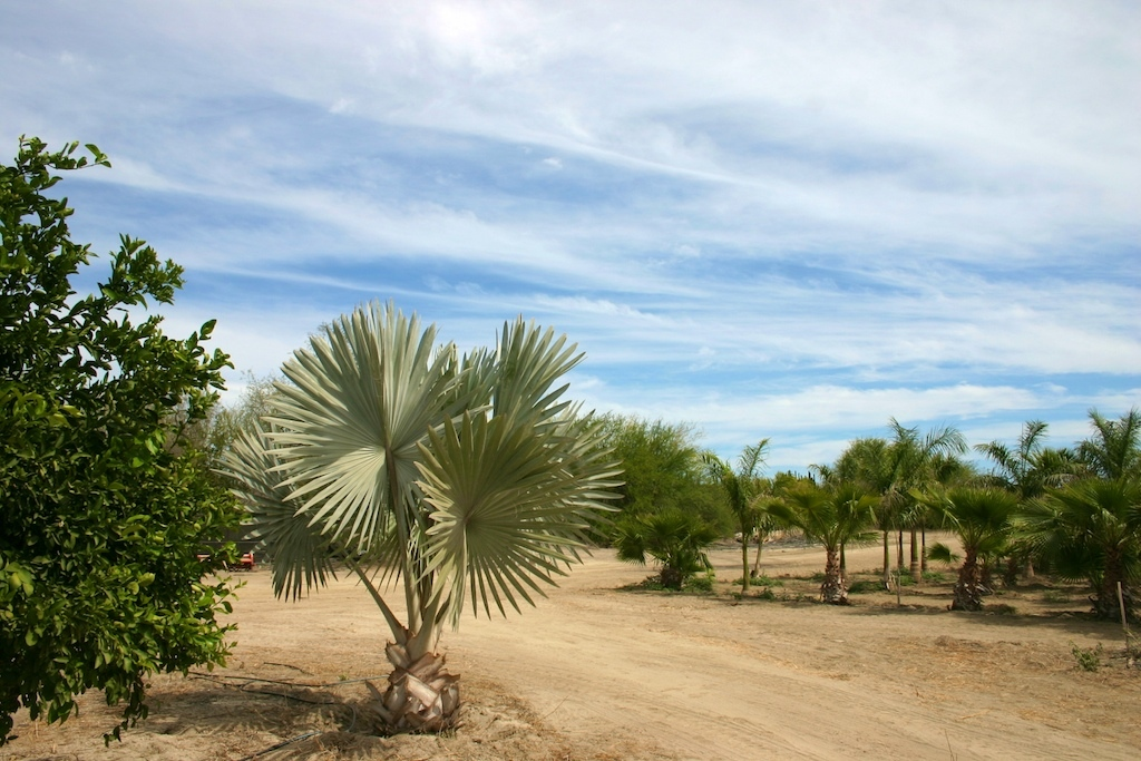 San Jose del Cabo, ,Land,For Sale,Domicilio Conocido,19-366