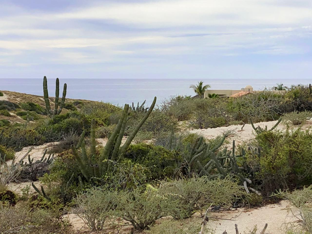 East Cape, ,Land,For Sale,Playa Tortuga, Mza 3, Lot 39,19-381