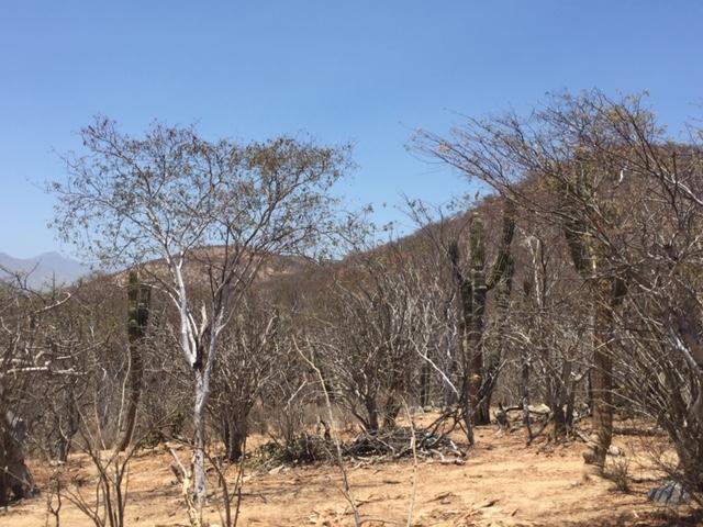 San Jose del Cabo, ,Land,For Sale,CAMINO A CABO DEL ESTE,19-1258