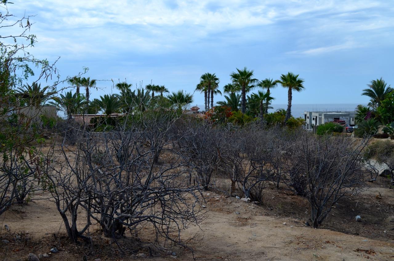 Punta Ballena #214-15