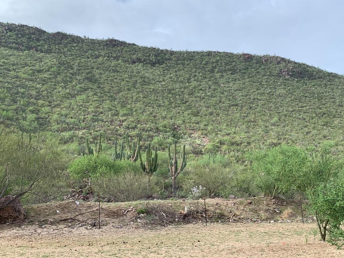 Rancho-14