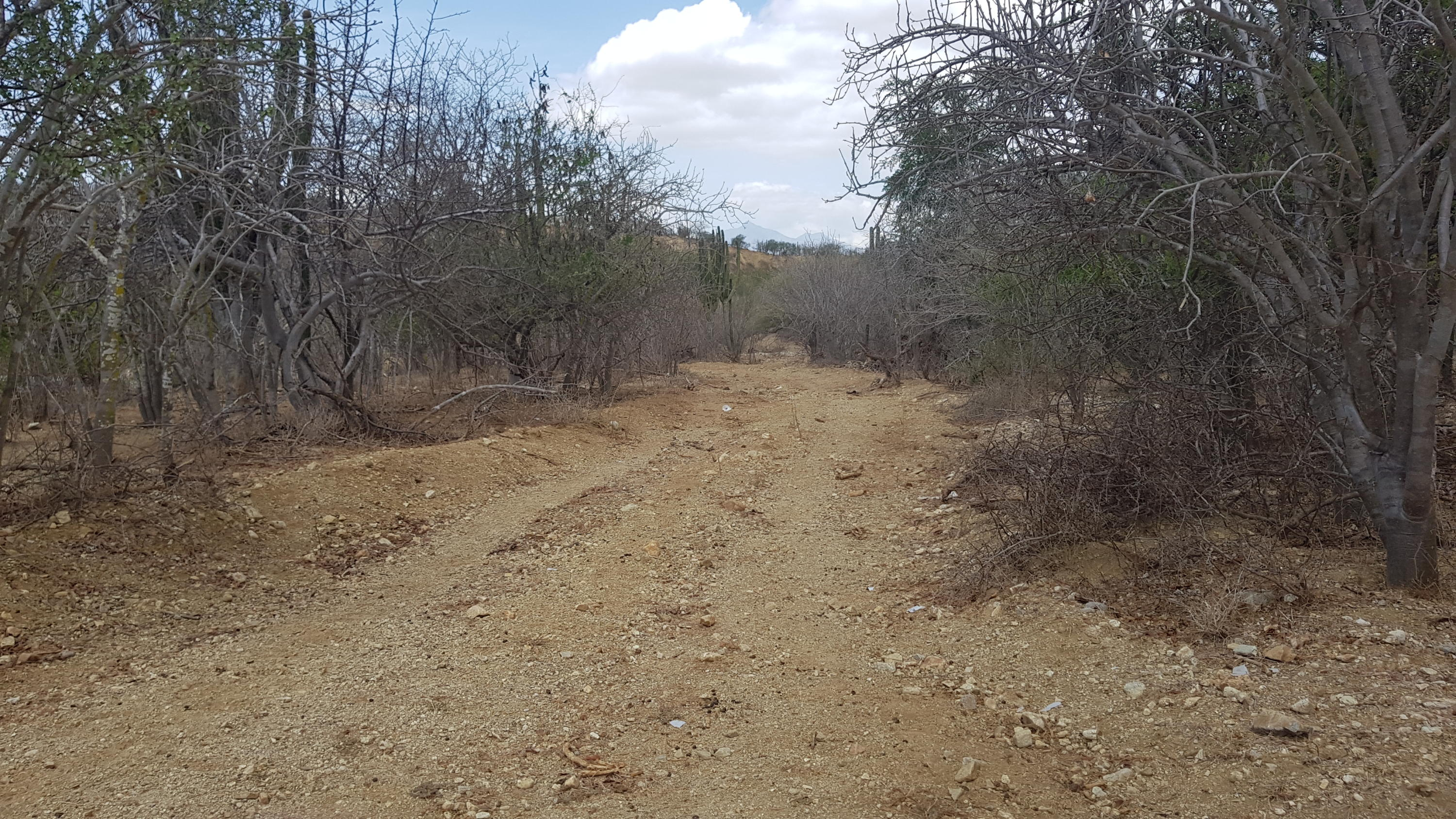 East Cape, ,Land,For Sale,SANTIAGO,20-611