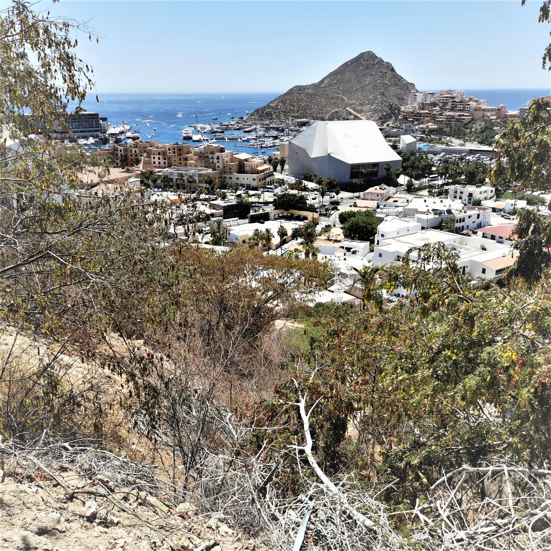 Camino Grande Cabo San Lucas