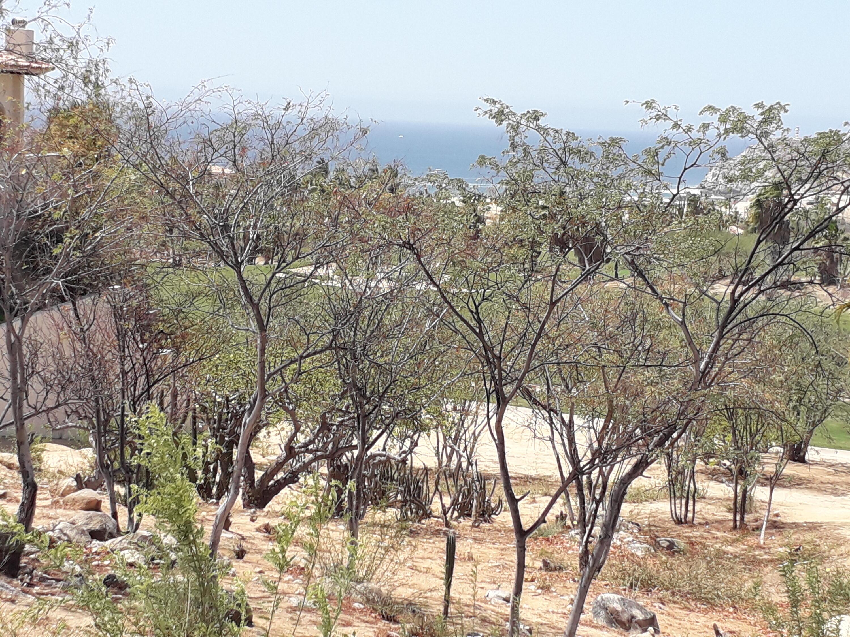 24 Las Colinas, BCS Cabo Corridor