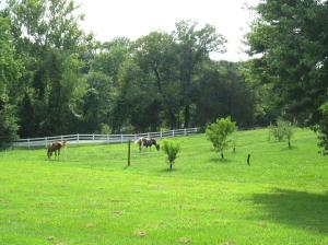 Property Photo: Horses in the Field