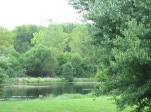 Property Photo: View of Lake from Property