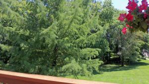 Property Photo: #32-deck view