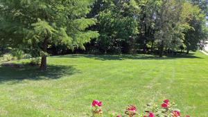Property Photo: #33-backyard