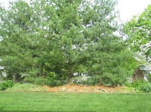 Property Photo: Backyard