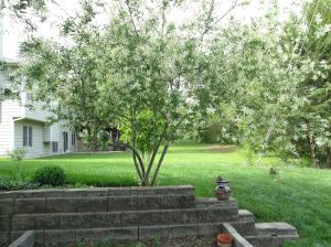 Property Photo: Flowering Tree & Garden Area