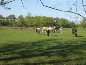 Property Photo: Cattle & Horses Grazing