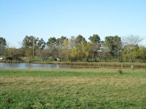 Property Photo: Lake & Pasture 2