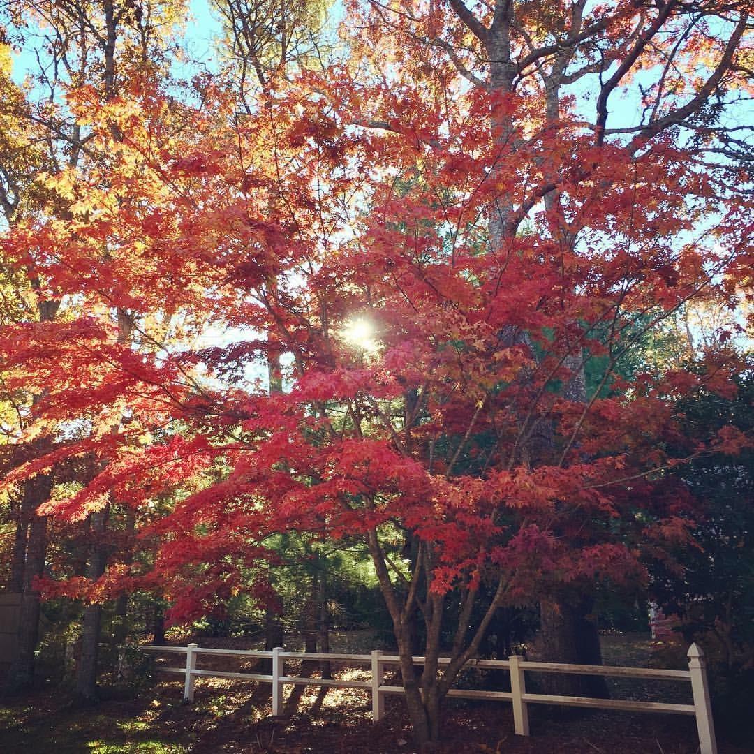338 White Oak Trail, Centerville