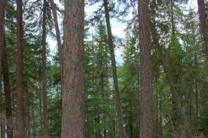 Big gorgeous mis of trees