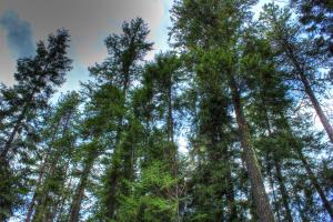 Gorgeous mature trees