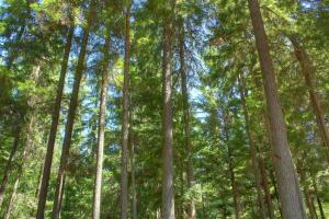 Big Beautiful Trees