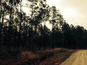 Landry Farms Way, McClellanville, SC 29458