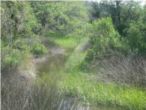 15014 Bennetts Point Road, Green Pond, SC 29446