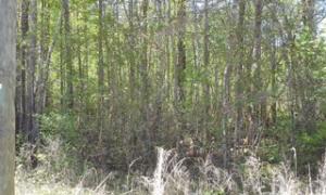 Photo of 0 Southsong Lane, , Goose Creek, South Carolina