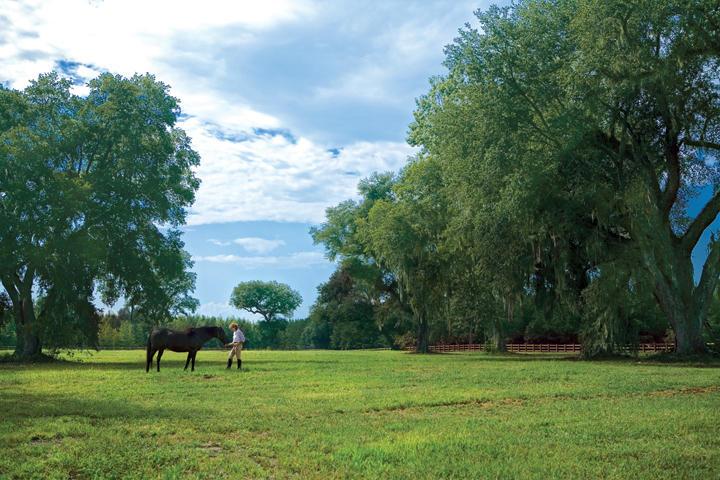Photo of 1 Saddlehorn