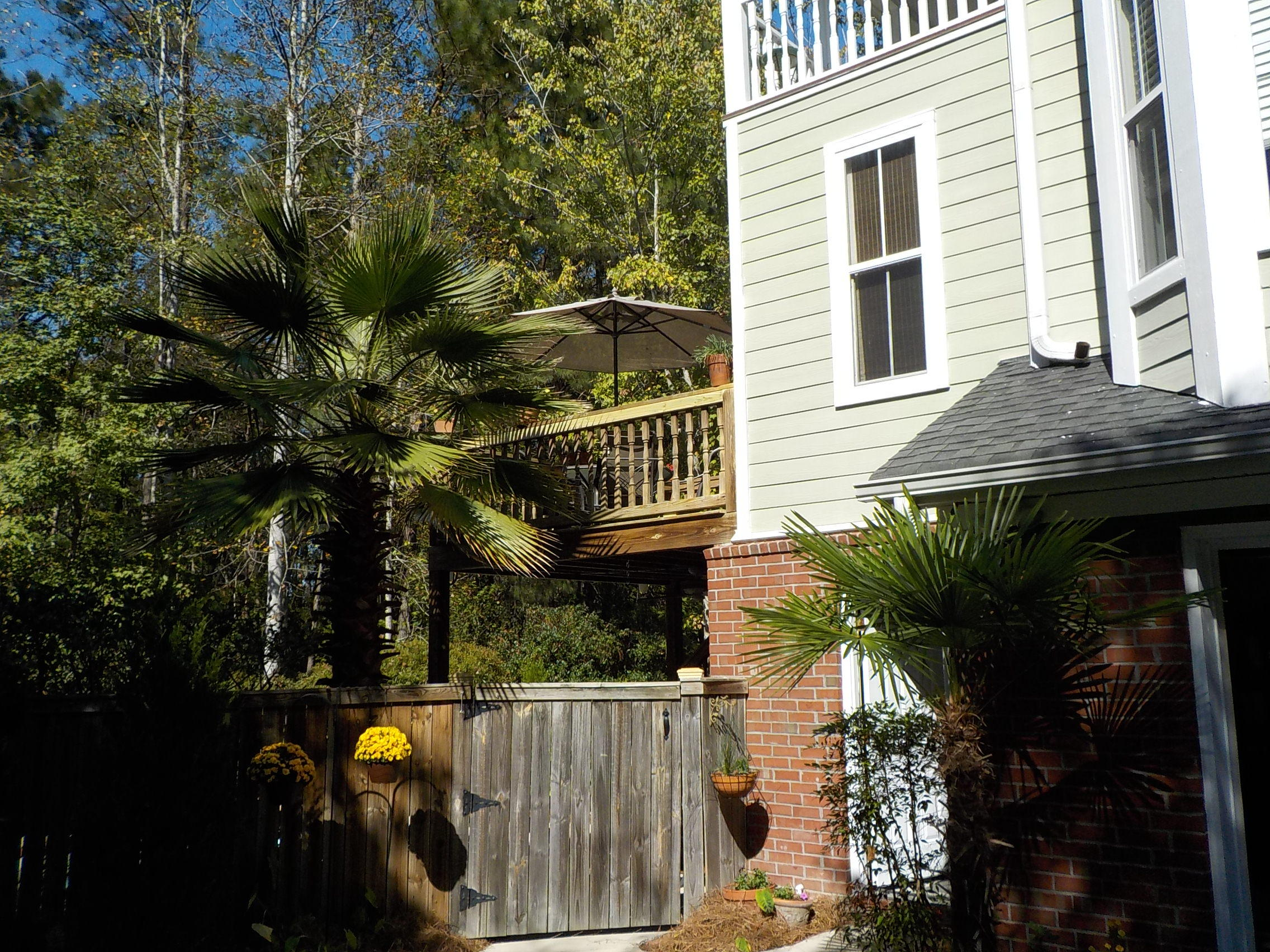 Cottages of Gahagan Homes For Sale - 129 White Pine, Summerville, SC - 18