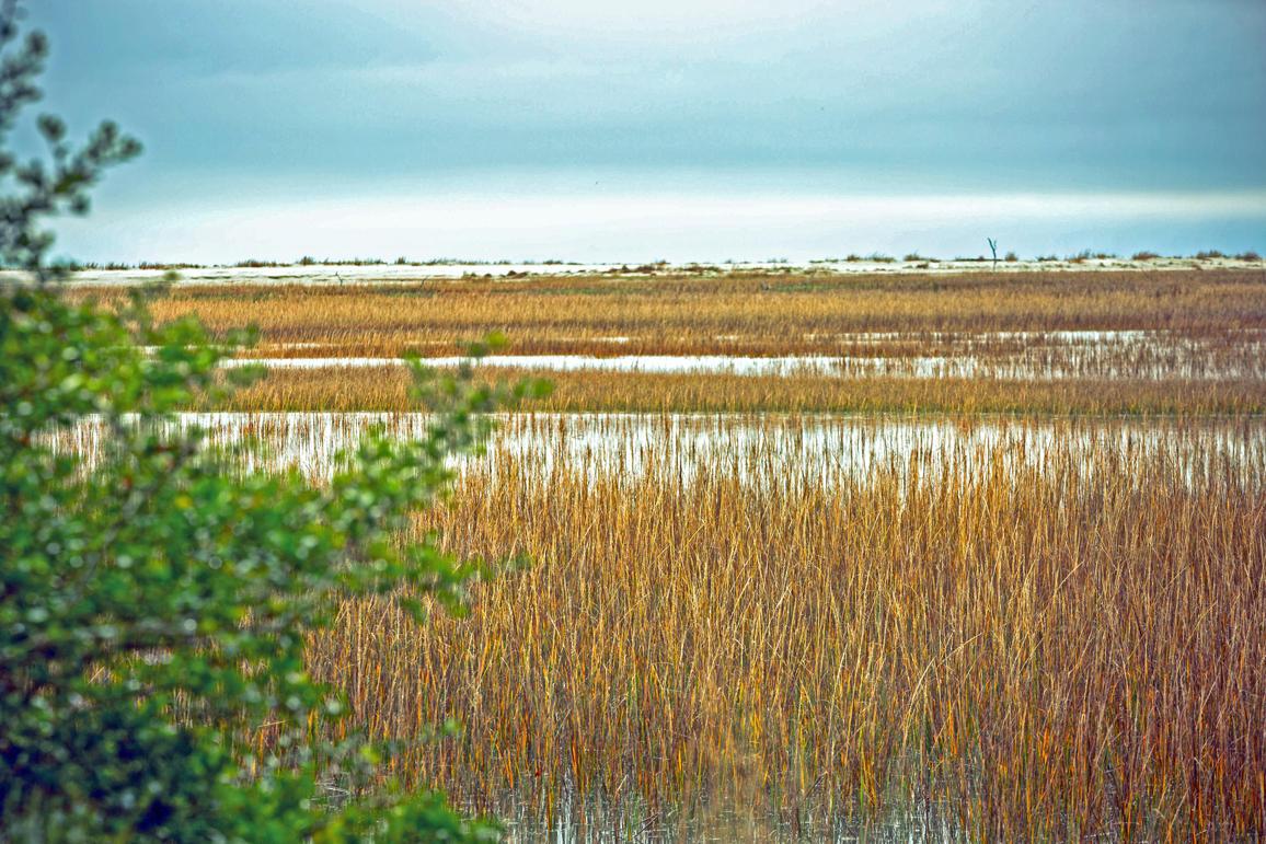 Seabrook Island Homes For Sale - 3011 Marsh Haven, Seabrook Island, SC - 45
