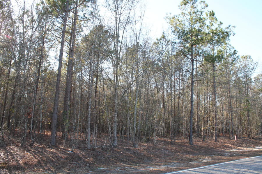 Photo of 12288 Bloomville Rd, Manning, SC 29102