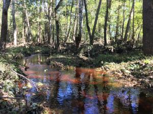 Calamus Pond Road, Summerville, SC 29486
