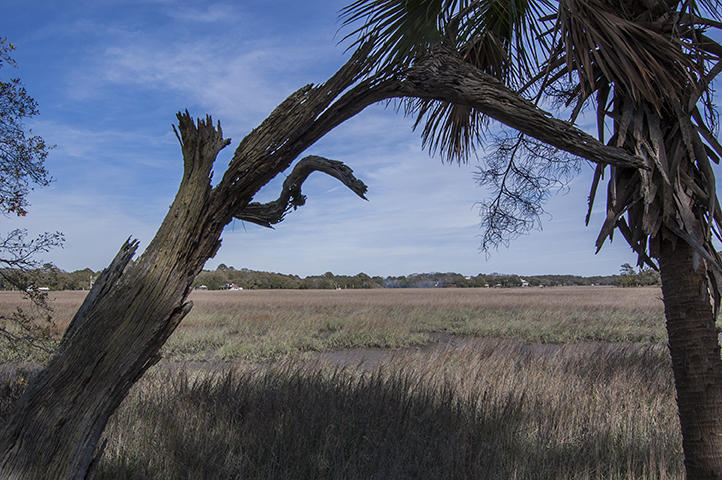 Photo of 3-J Cape Palmetto