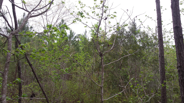 Photo of 131 Hendorrich Trail