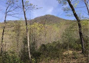 25 Buck Creek Trail, Travelers Rest, SC 29690