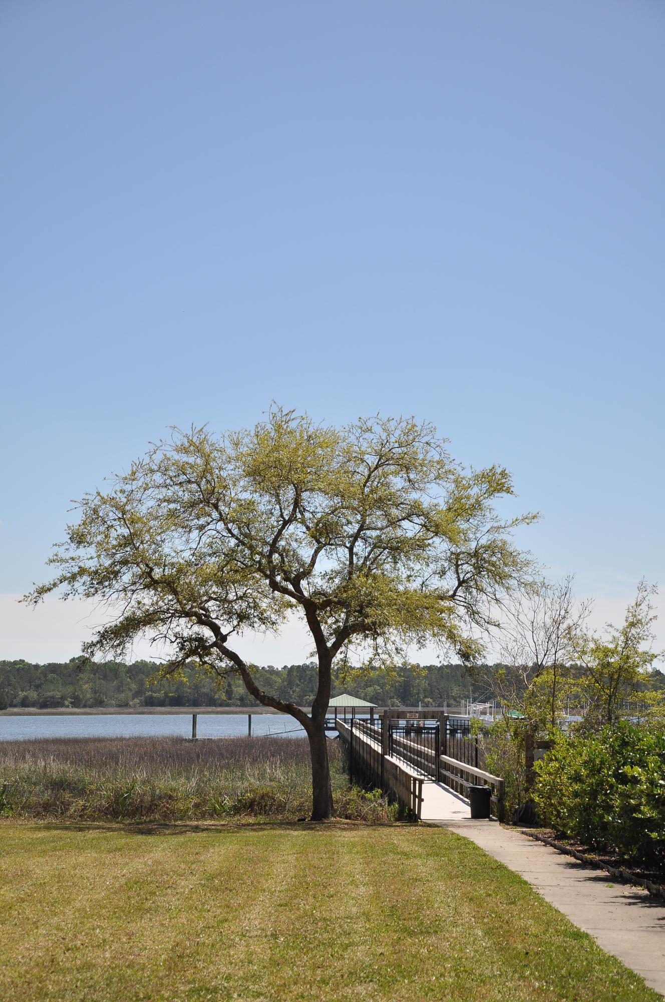 Photo of 139 Wando Reach Dr, Charleston, SC 29492