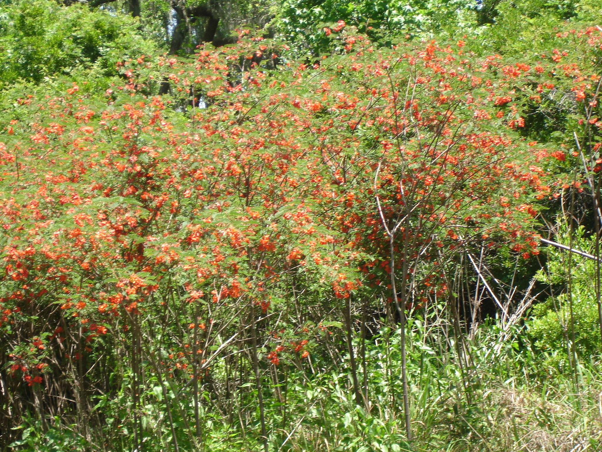 Photo of 2 Mateeba Gardens Rd.