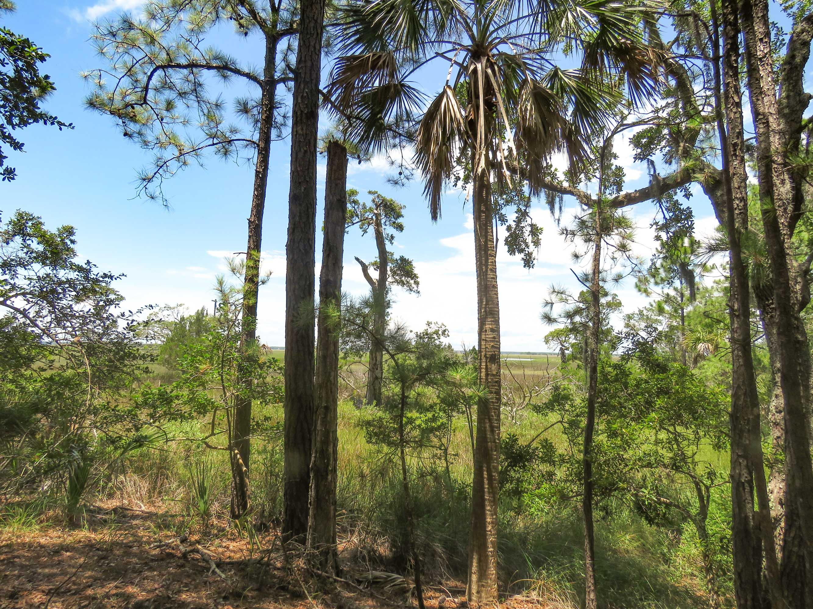Photo of 322 Old House Ln #108, Dewees Island, SC 29451