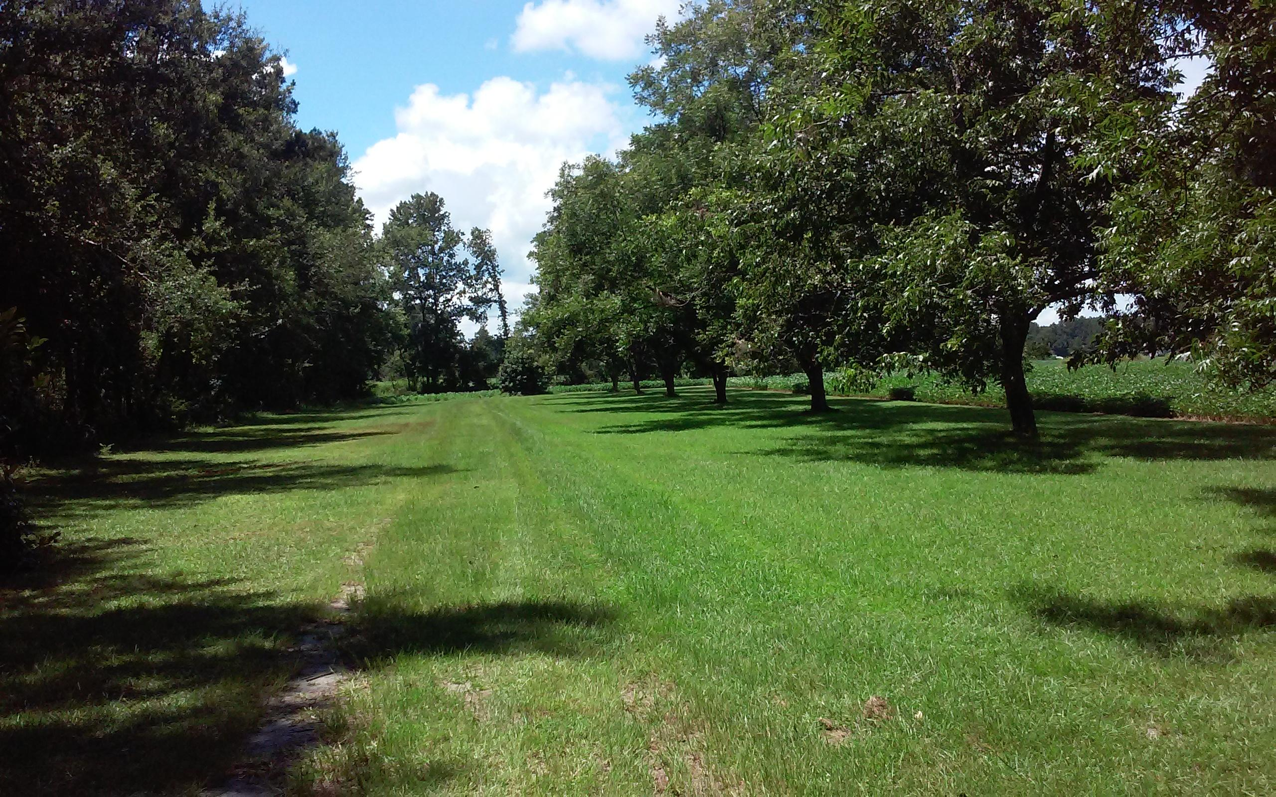 Photo of 205 Odd Farm Ln, Holly Hill, SC 29059