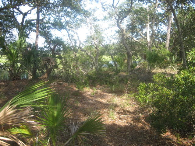 Photo of 3-K Cape Palmetto