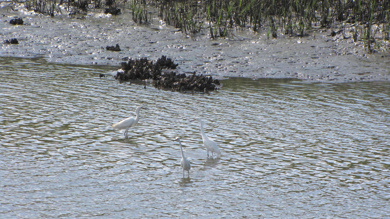 Photo of 8694 Glascow Island Ln, Edisto Island, SC 29438