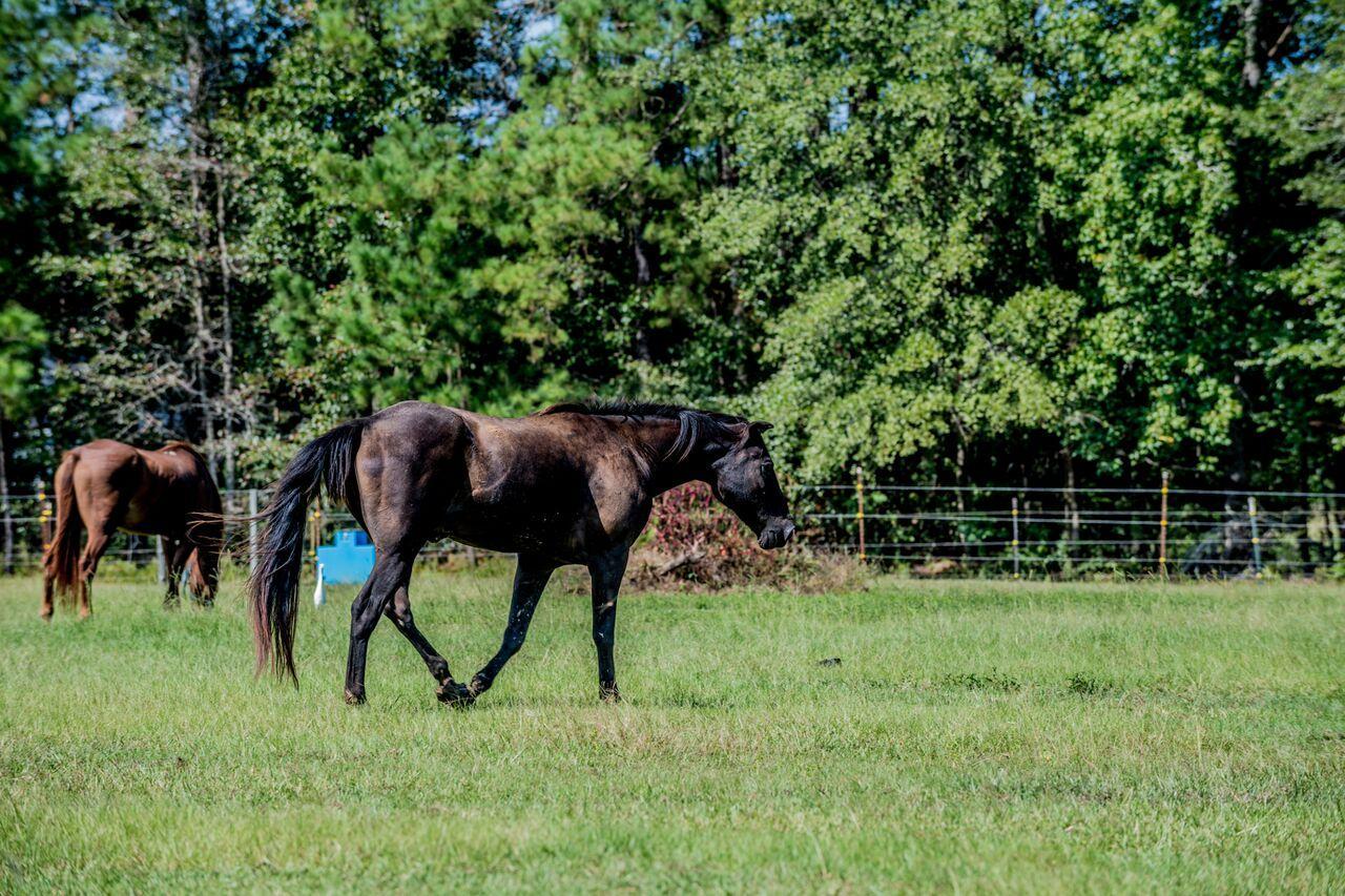 Photo of 105 Soaring Way, Summerville, SC 29483
