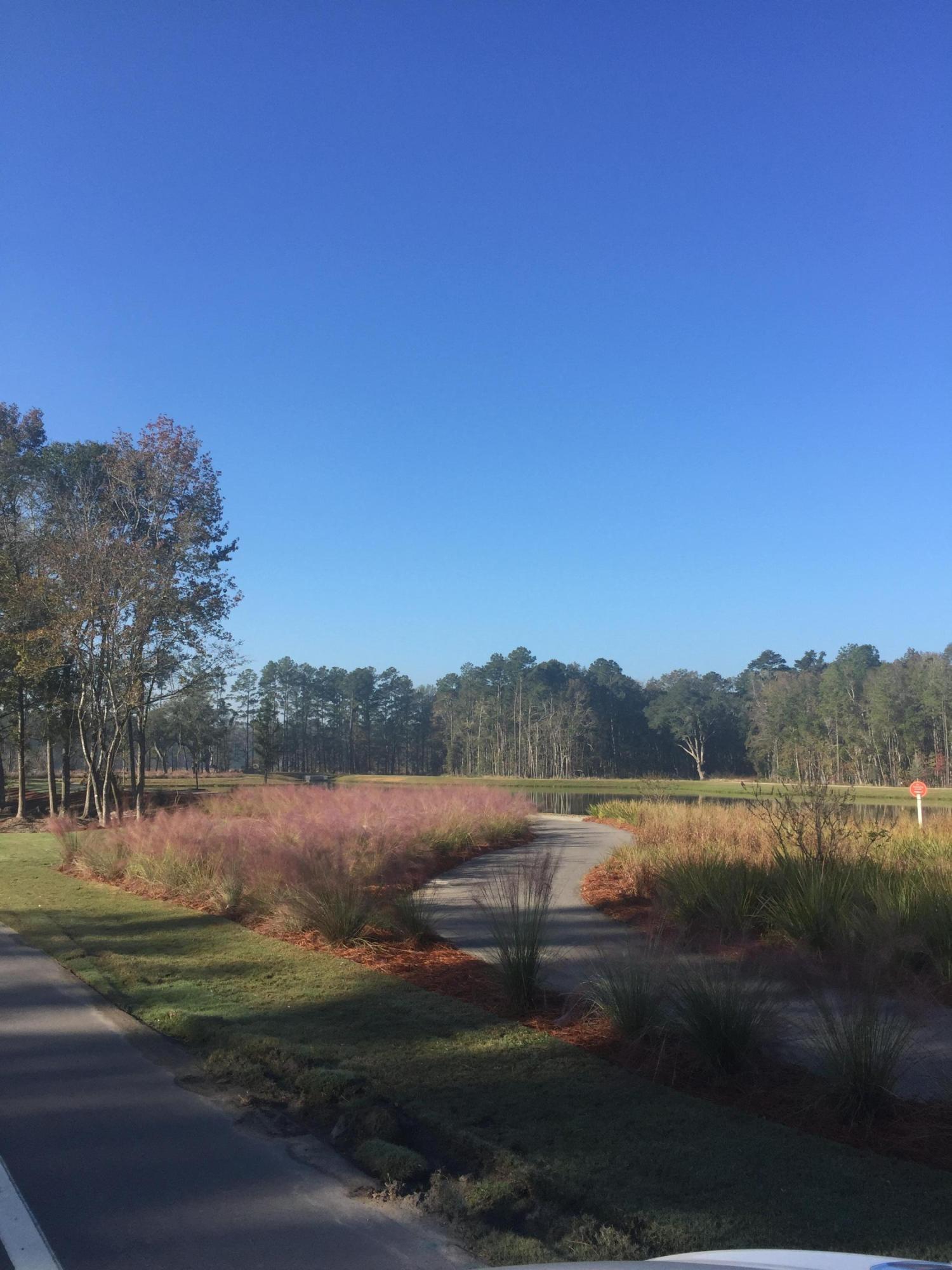Photo of 416 Watergrass