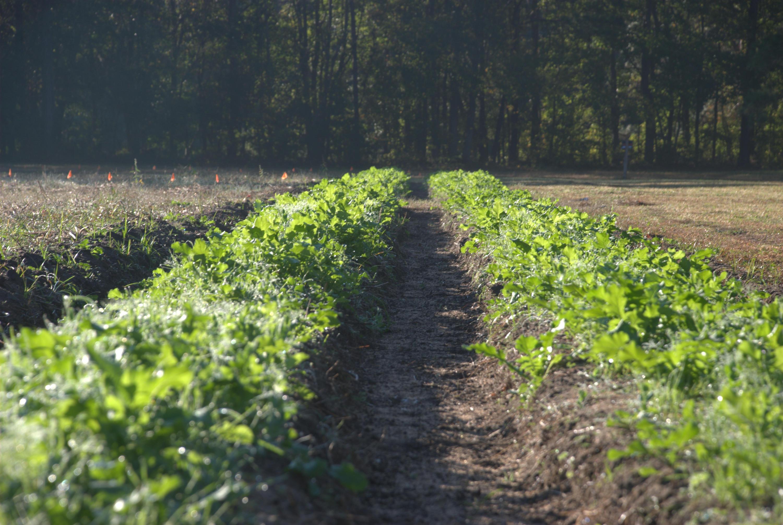 Photo of 4400 Wando Farms Rd, Awendaw, SC 29429
