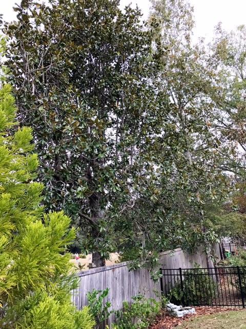 Photo of 187 Angora Way, Summerville, SC 29485