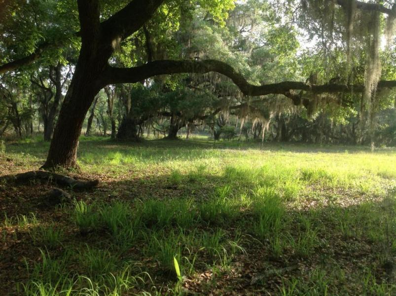 Photo of 7122 Lady Elizabeth Ln, Wadmalaw Island, SC 29487