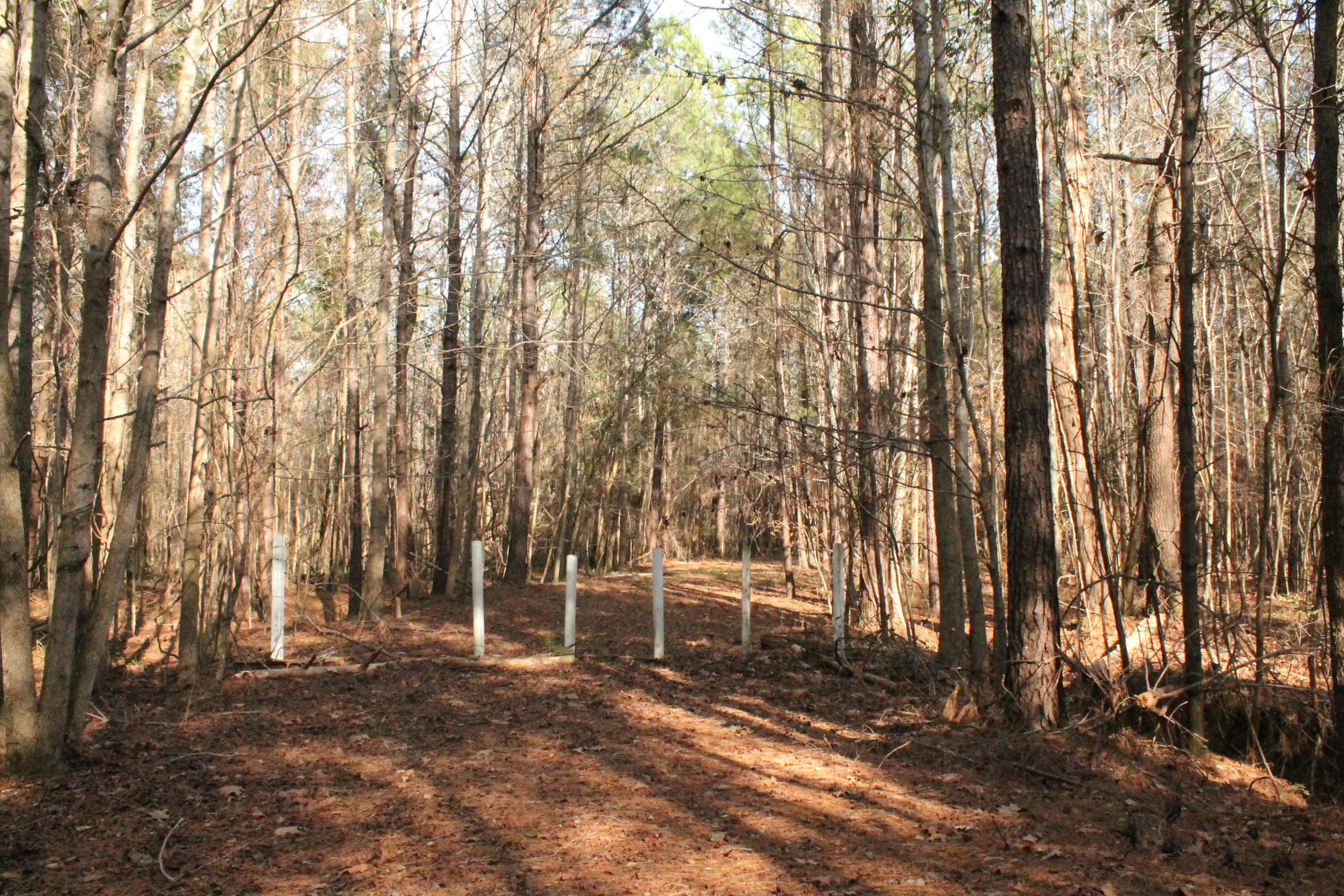 Photo of 5020 Ashley River Rd, Summerville, SC 29485