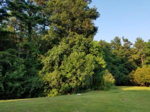 Home for Sale Carriage Ride Lane, Legend Oaks Plantation, Summerville, SC