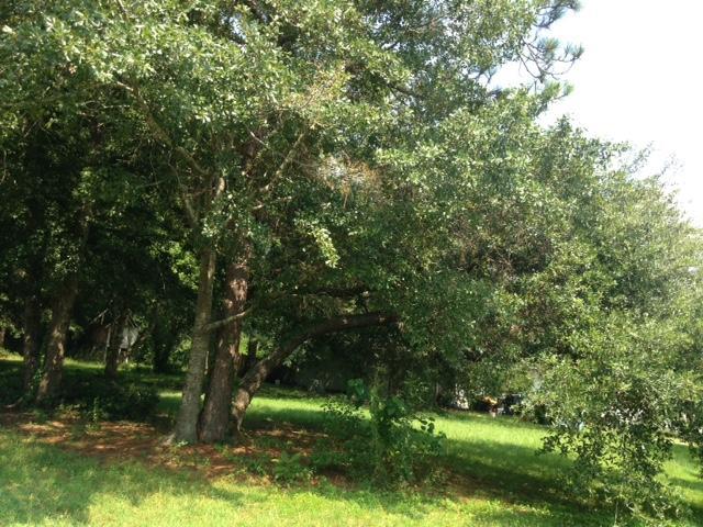 Glynn Acres Homes For Sale - 801 Palmetto, Summerville, SC - 0