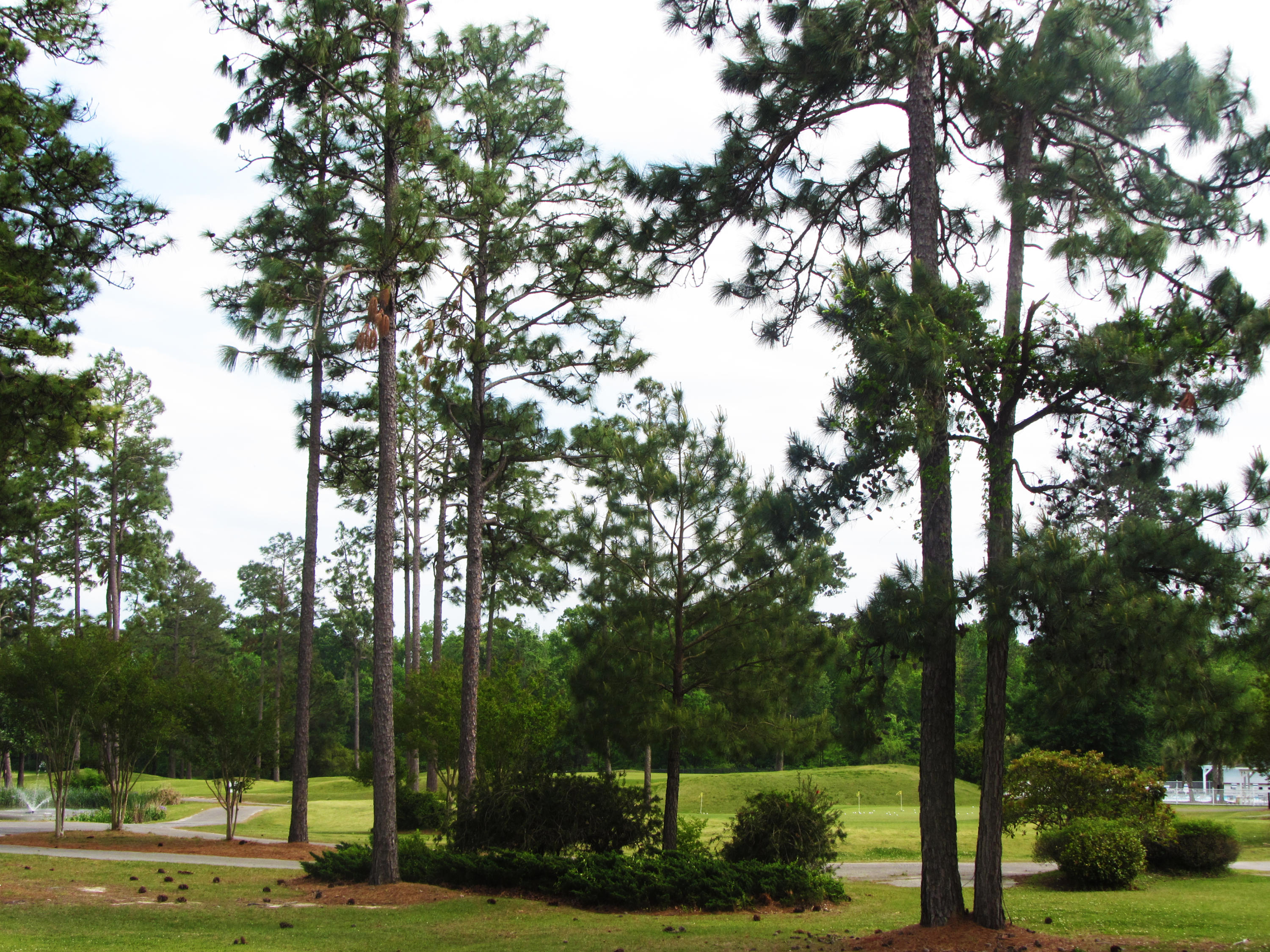 Pine Forest Country Club Homes For Sale - 617 Kilarney, Summerville, SC - 26