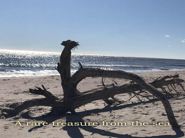 Edisto Beach Homes For Sale - 708 Palmetto, Edisto Island, SC - 87